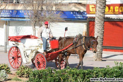 Mallorca Urlaubsbild - Pferdekutsche am Ballermann